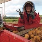 【理科大生必見】今年もやります!北海道が誇るじゃがいもの町「厚沢部町」にて、住み込み農作業短期バイトを募集