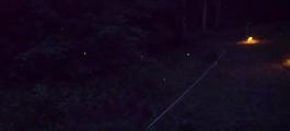 北海道で最も美しい夜を過ごせる「ホタルの里」を知っていますか?by長万部町